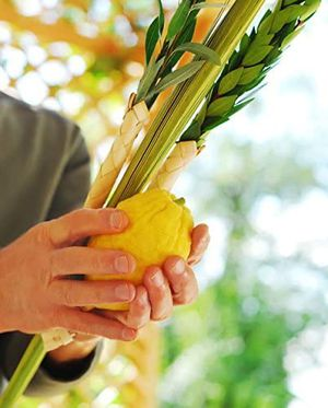 Lulav and etrog deals for Sukkot for Sale in Delray Beach, FL