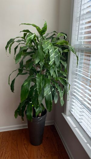 Natural Plant with Pot for Sale in Alpharetta, GA