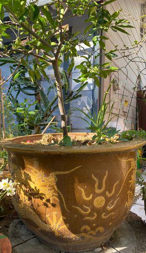 Lemon tree in large ceramic pot for Sale in San Jose, CA