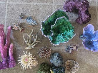 Aquarium Coral Decorations *Freshwater for Sale in Tampa,  FL