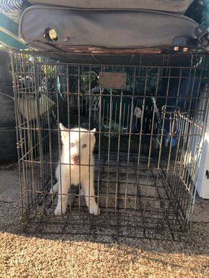 Dog kennel for Sale in San Bernardino, CA