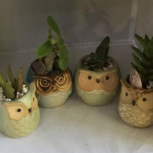 Ceramic Owl Planters with Live Succulents for Sale in Poinciana, FL