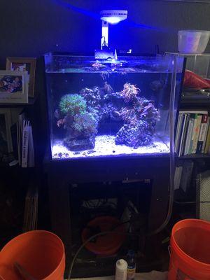 40 gallon sat water tank, 3 fish, 15 live collars for Sale in Santa Clara, CA
