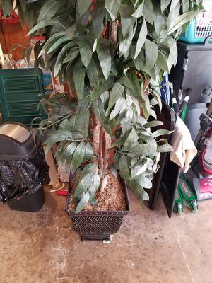 Fake tree 6ft for Sale in San Antonio, TX