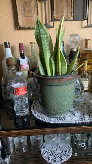 Snake 🐍 plants 🌱 for Sale in Whittier, CA