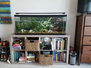 55 gallon fish tank, canister filter, light, fish, substrate, and small quarantine tank. Package Deal!! for Sale in Miami, FL