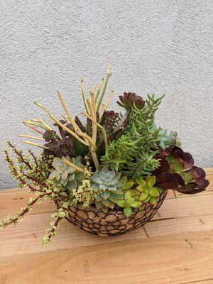Succulent arrangements for Sale in Anaheim, CA