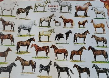 Huge Poster Of Horses for Sale in Goodyear,  AZ
