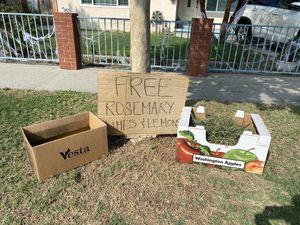 FREE fresh rosemary, 🍋 & limes. for Sale in Norwalk, CA