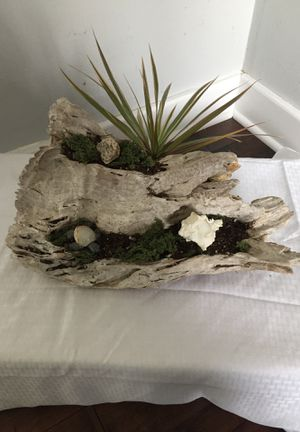 Driftwood Succulent planter for Sale in Marshfield, MA