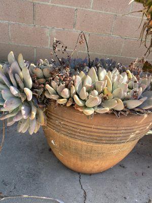 Succulent in clay pot for Sale in Rosemead, CA