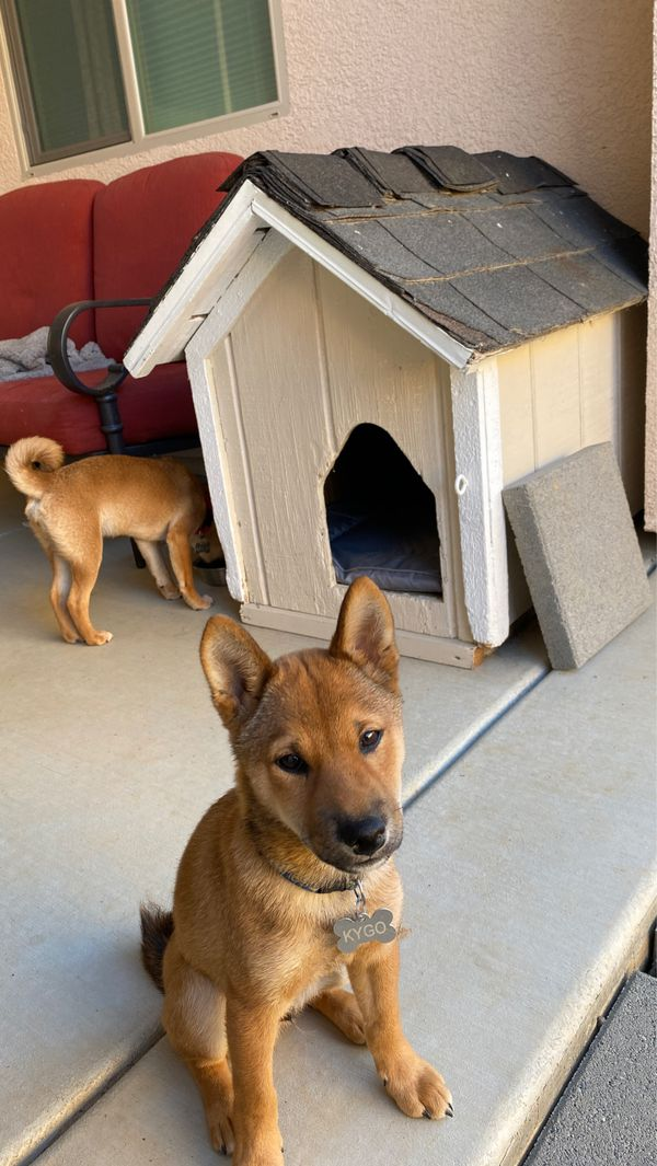 Dog house great condition