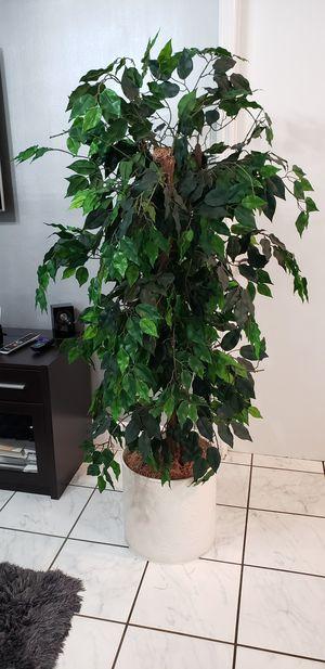Fake plant for Sale in Orlando, FL