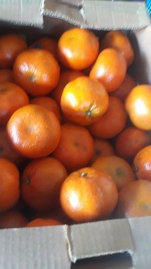 Mandarina 10 x $5 for Sale in Deltona, FL