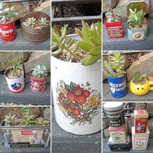 Succulents in Vintage Tins for Sale in Dallas, TX