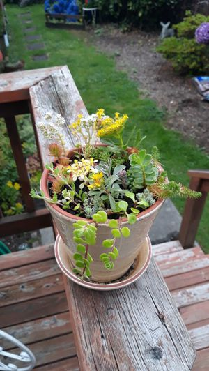 Colorful Clay Pot Full of Succulents Plant Arrangement for Sale in Sumner, WA