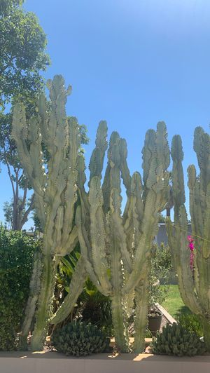If you want little pieces of cactus for Sale in Santa Ana, CA