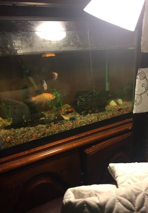 Fish tank+fishes for Sale in Baltimore, MD