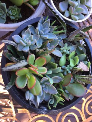 Plants for Sale in San Diego, CA