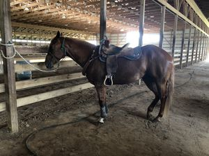 "14.5"" Circle Y NBHA Saddle for Sale in Elkhart, IN"