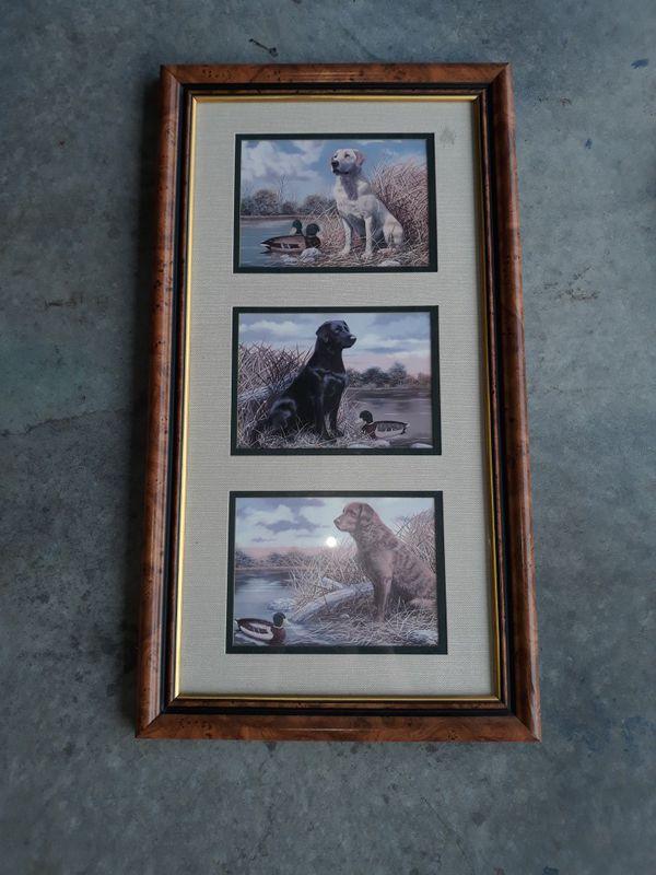 Labrador Picture