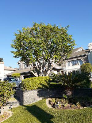 Poda tus arboles y palmas por un bajo precio- trim your palms and trees for a low price for Sale in Riverside, CA