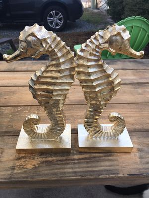 Seahorse for Sale in FL, US