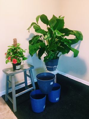 Live Indoor Plants & New flower pots worth $188.95 for Sale in Lexington, KY