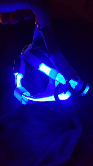 Blue LED Dog Harness - Small for Sale in Orlando, FL