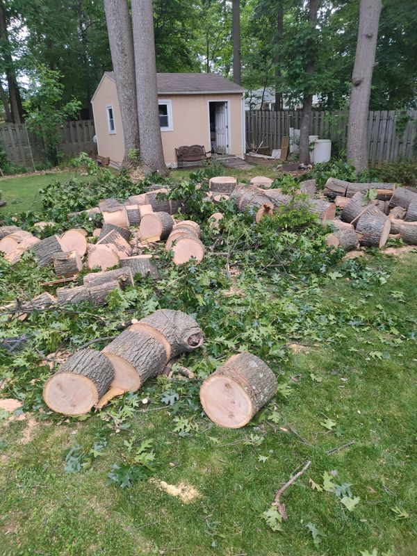 Free wood logs