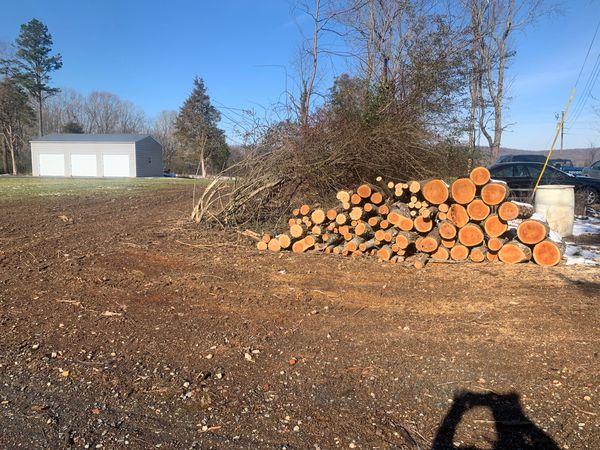 Oak wood for free.