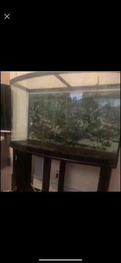 Fish Tank And Filter  for Sale in Irvington, NJ
