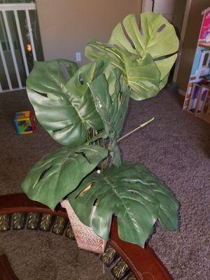 Fake plants for Sale in Avondale, AZ