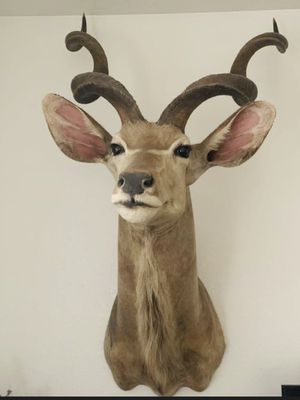 Kudu taxidermy for Sale in Adelanto, CA
