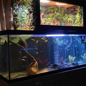 80+ Gallon Aquarium Plus Lots Of Extras for Sale in San Jose, CA