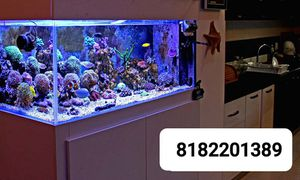 Pond Fish Tank Fountain for Sale in Los Angeles, CA