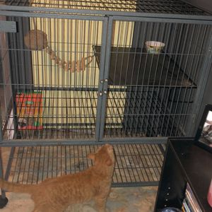 Rodent Cage for Sale in Henderson, KY
