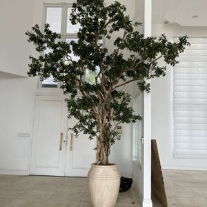 12 ft Tree for Sale for Sale in Hollywood, FL