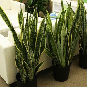 Mother in Law Snake Plant Big Size Full Pot $40/each pot for Sale in Garden Grove, CA
