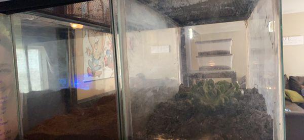 two 10 gallon fish/reptile tanks/terrariums