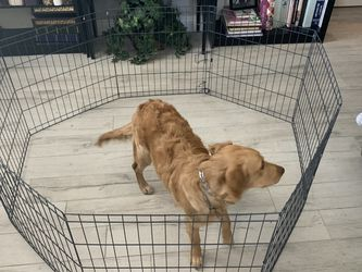 Puppy Pen (octagon) for Sale in Clermont,  FL