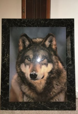 Snowy Wolf Picture for Sale in Apex, NC