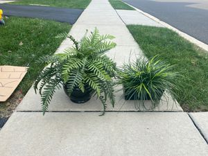 2 fake plants for Sale in North Wales, PA