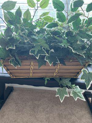 BIG DECOR PLANT for Sale in Bristow, VA