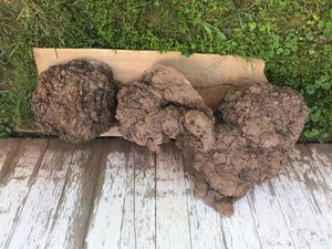 Maple Burls for Sale in York Haven, PA