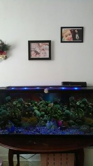 °HUGE°77 gallon fish tank for Sale in Miami, FL