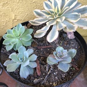 Succulent variety pot for Sale in Riverside, CA