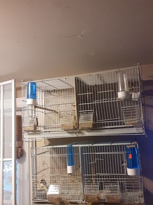 Cages for sale for Sale in North Miami Beach, FL