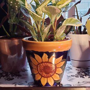 "Sunflower Pot 6"" for Sale in Fontana, CA"