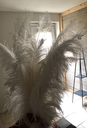 Large Ostrich feathers (20) for Sale in Ashburn, VA